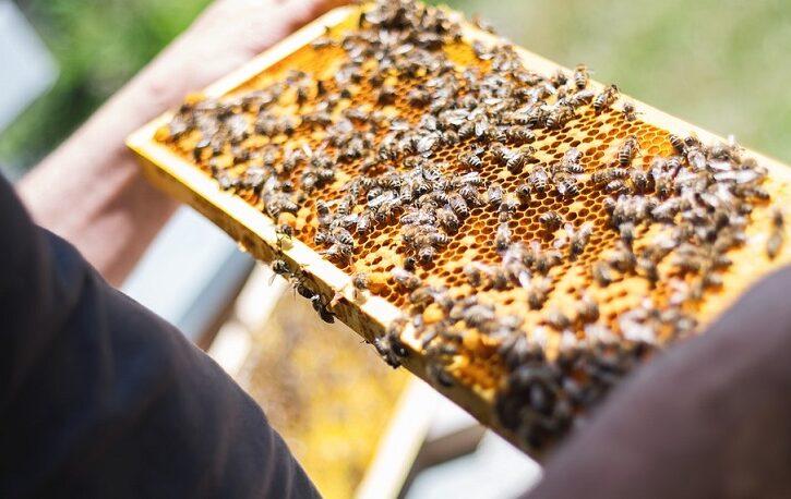 Solicitan incluir al sector apícola en el Seguro Agrícola